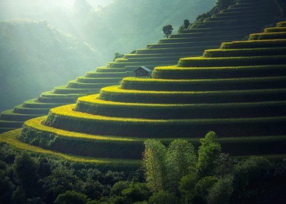 rice-plantation-1822444_960_720