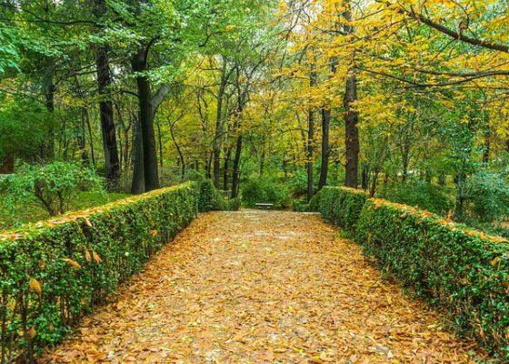 autumn-1019284_640