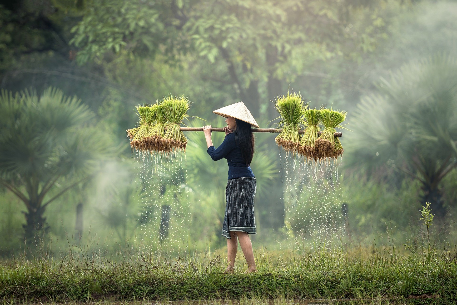 harvesting-1822578_1920