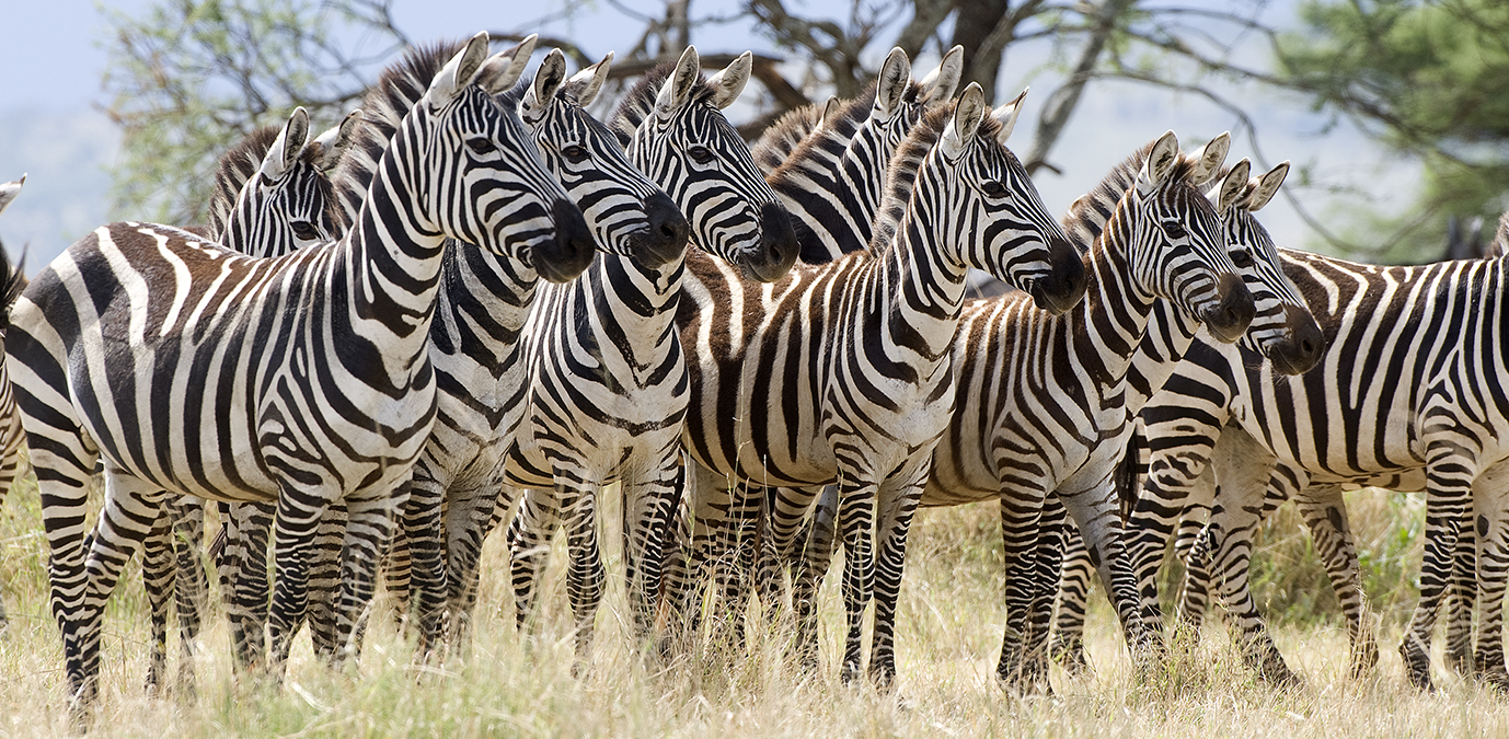 Destination du moment : la Tanzanie