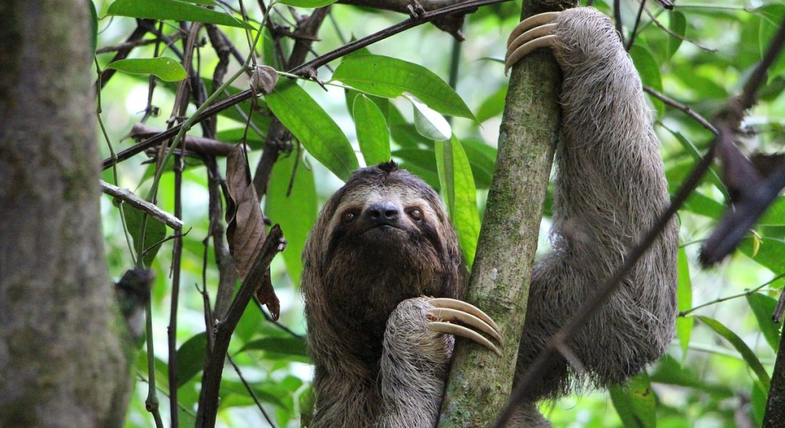 sloth-2759724_1280