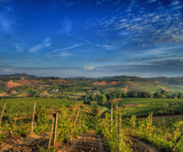 Vigne de Chianti